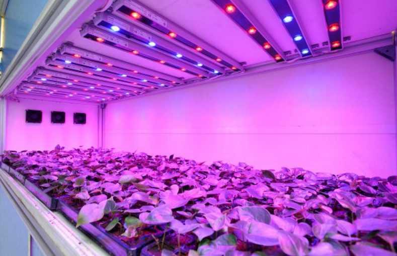 Как сделать своими руками светодиодные лампы для растений