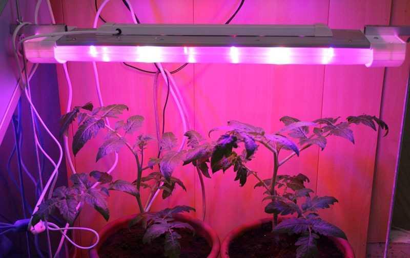 Как сделать подсветку из светодиодной ленты для рассады