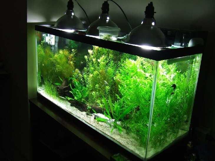 Подсветка аквариума лампами накаливания