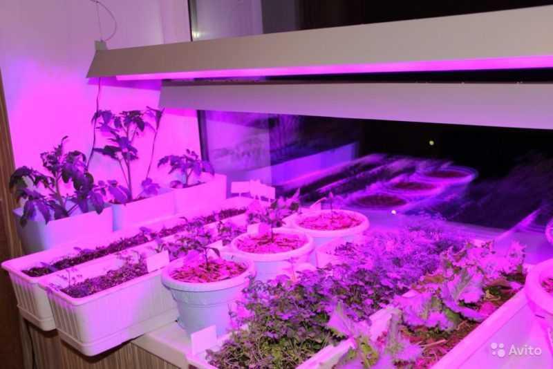 Фиолетовая подсветка растений