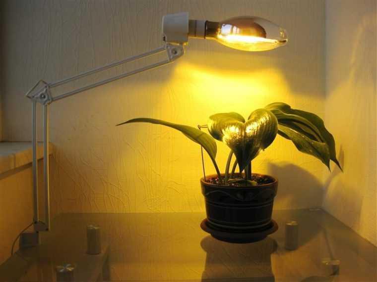 Натриевая лампа для подсветки растений