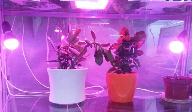 Подсветка растений лампами ЭТМ с цоколем E27