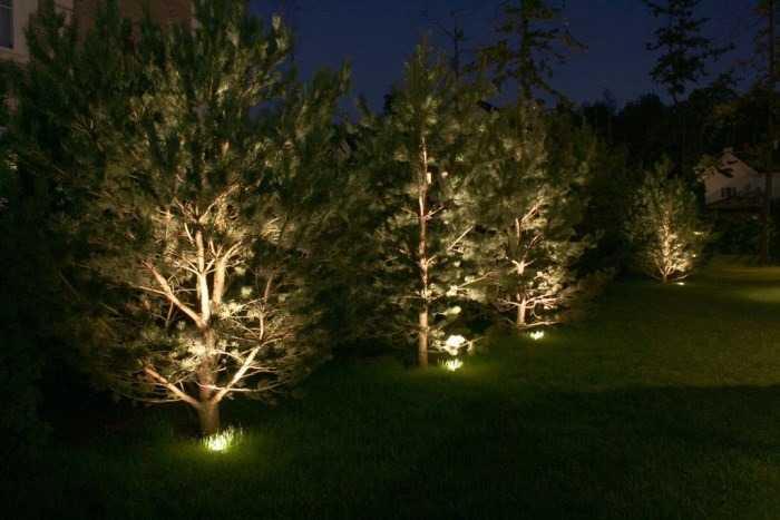 Подсветка деревьев в саду с помощью грунтовых светильников